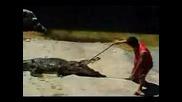 Човек Си Пъха Главата В Устата На Крокодил