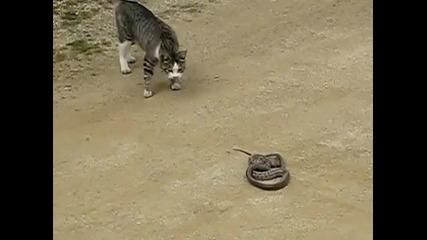 Смело, сладко котенце ги играе със змия ..