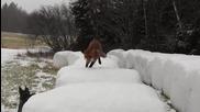 Дива лисица и куче се срещат в гората. Това, което се случва след това ще ви изуми!!!