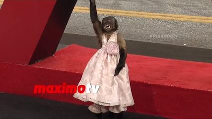 Маймунка звезда позира!