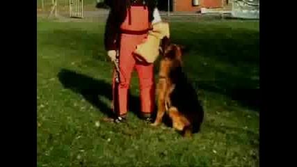 Немска Овчарка - Хапане