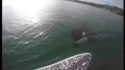 Любопитна косатка плува близо до сърфист ,като го изненада !