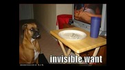 Много Смешни Кучета (част 12)