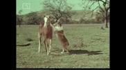 Ласи - Бг Аудио, Епизод (1965) - Тиха заплаха