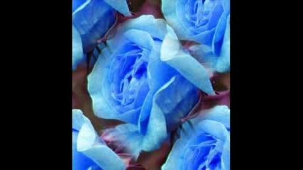 Рози ...