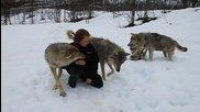 Красива жена се целува и си играе с четири красиви вълка.•красота.