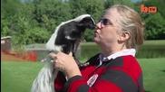 Skunk почитателите празнуват в годишния фестивал