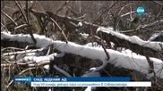 Над 50 000 декара гора са унищожени в Северозапада