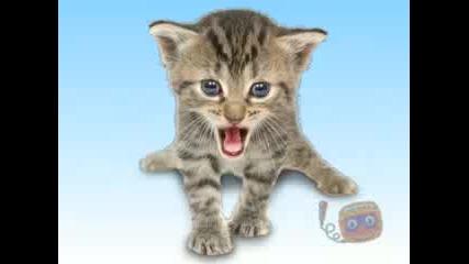 Kitties Singing Joy - Joy - Joy!