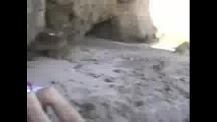 Инцидент На Плажа