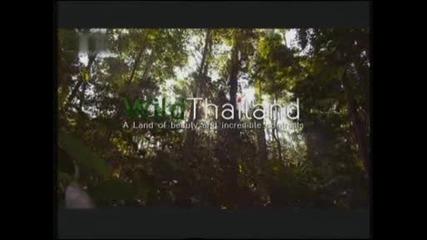 Дивият Тайланд - Земя на красота и невероятни контрасти