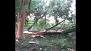 Светкавица поразява дърво в Дунавци 26.06.09