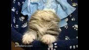 най - сладкия маник заспива , докато го снимат
