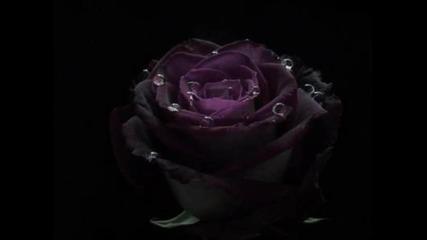 Владимир Тимофеев - Черная роза