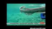Странна Акула Намерена В Япония