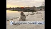 Бебе тюленче бе намерено да плаче, след като се загубило, на пристанището в шведския град Сундсвал