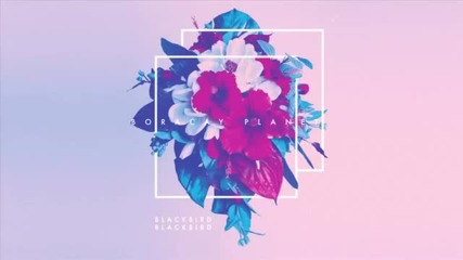 Blackbird Blackbird - It's A War