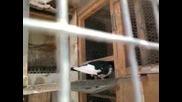 zakurteni gulabi 3