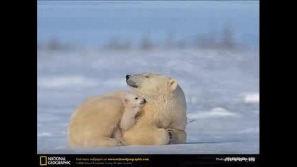 Невероятни Снимки От National Geographic