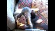 Голямата любов между котка и маймуна