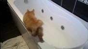 Коте лови риба във ваната