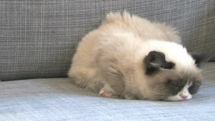 Harlem Shake - Grumpy Cat