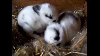 Малки зайчета се гушкат