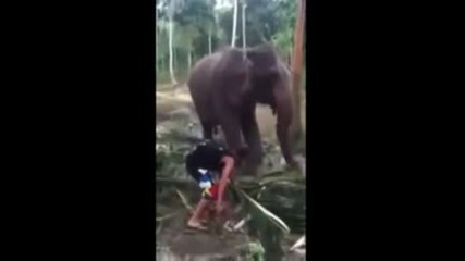 Слон нокаутира досаден турист !! :d