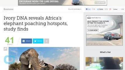 Elephant Poaching Hotspots Revealed Via Ivory DNA