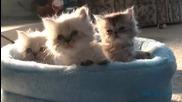 Три малки котенца - изключително сладки