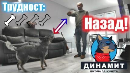 Как да научим кучето да ходи назад