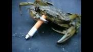 До Сега - Рак Пушач !!!