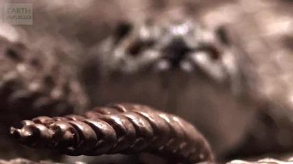 Гърмяща змия и опашката й - slow motion