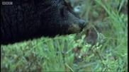 Защо мечките спят зимен сън?
