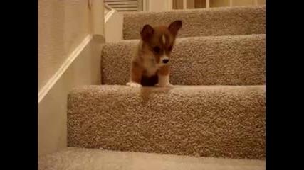 Малко кутре и фобията му към стъпалата