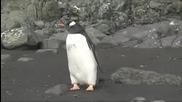 Пингвина ще си изяде боя, ако морският лъв успее да си поеме въздух