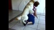 Това куче направо се сгаври с горката женица - никак не е за изпускане