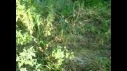 Руския Тарзан сгафи