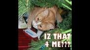Смешни Котки (част 7)