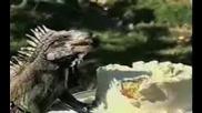 Игуана Проваля Сватба !