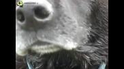 Изкъпано Куче В Студа