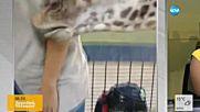 Бебе жираф разцелува репортерка по време на жив ефир