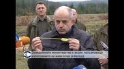 Земеделското министерство с акция, насърчаваща използването на живи елхи за Коледа