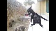 Малко магаренце се люлее на люлка