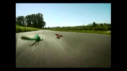 Insect Race