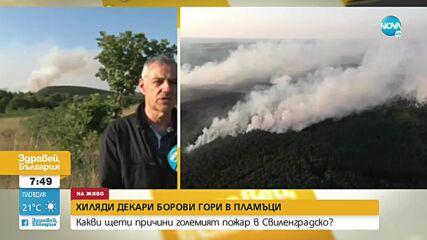 Продължава да гори боровият масив край Свиленград