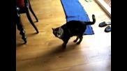 Котка играеща на 'i Spy'