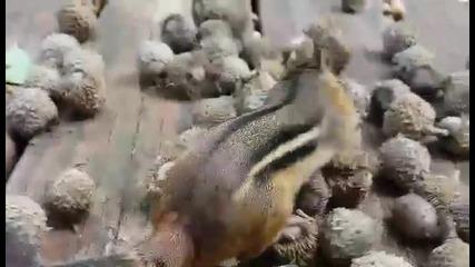 Най-алчните катерички