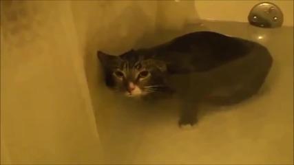 Забавна компилация котки в банята