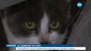 6 месеца затвор за убийство на малко коте във Варна